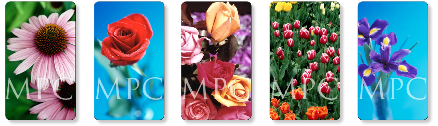 Flower memorial prayer cards